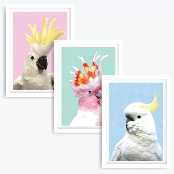 Three Cockies Art Prints (set of 3)