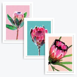 Proteas Art Prints (set of 3)